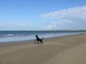 Strand und Meer, ein traumhafter Spielplatz für Hunde