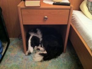 Buchweizen für guten Schlaf