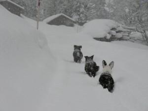 Skiurlaub 2008 125