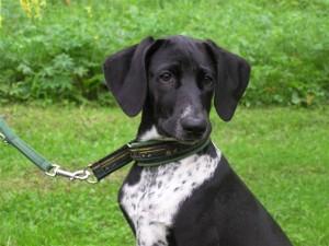 Ein weiches Halsband für einen braven Hund