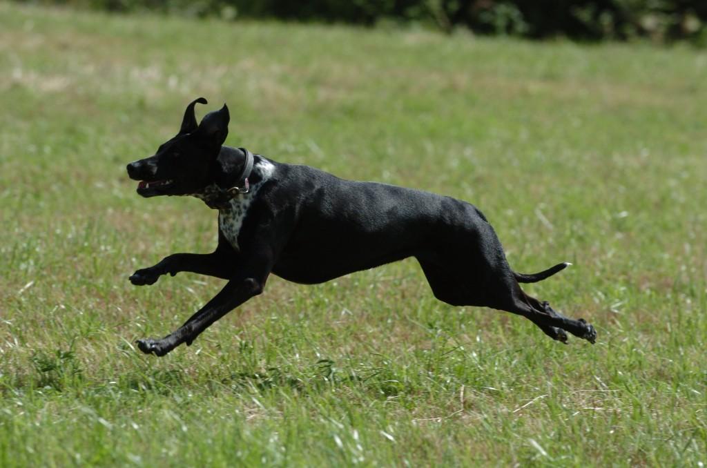 Hund entlaufen – dann wird man noch betrogen und erpresst!