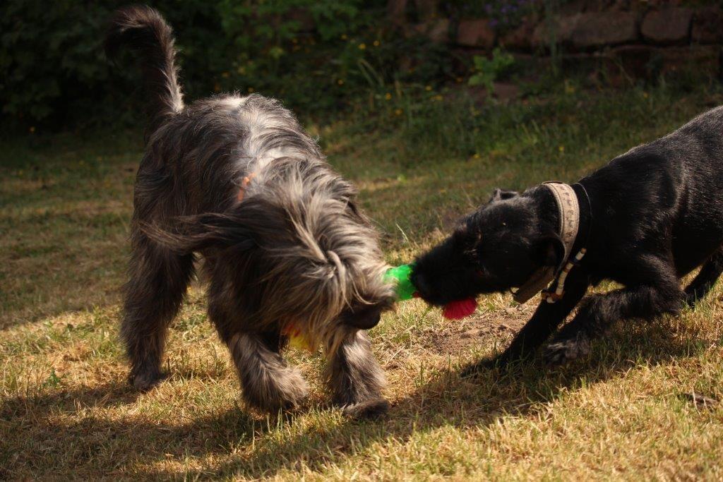 Ist der Hund wirklich ein Rudeltier?