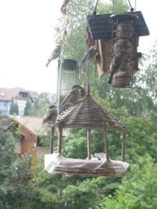 Wildvögel –  und was wir für sie tun können!