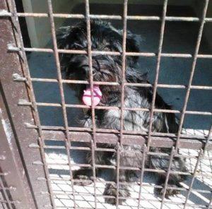 Tierschutzorganisation PETA in Verruf geraten!?