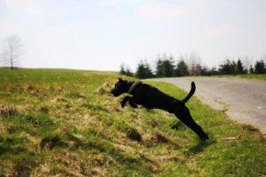 Hunde pinkeln Richtung Norden oder Süden!