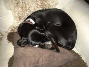 Der Hund im Bett – in der Antike ganz normal!