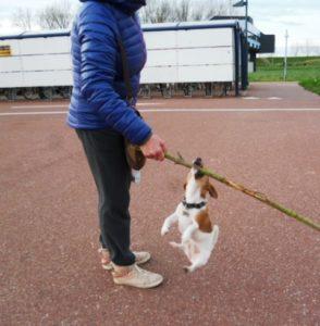 Hunde reagieren auf Angstschweiß!