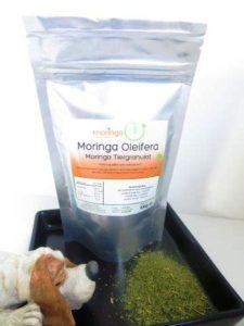 Moringa – der Wunderbaum!
