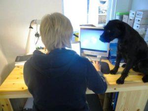 Hunde am Arbeitsplatz!