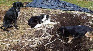 Tödliche Hundebisse- was uns bewegt!