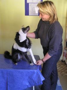 Erwartungen an einen guten Tierarzt