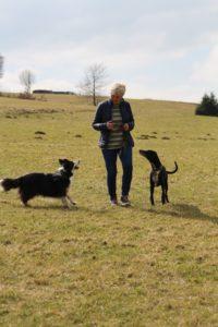 Fitness-Tracking für Hunde?