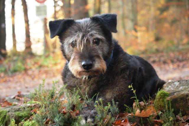 Demenz beim Hund