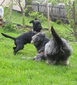 Hilfe – mein Hund ist hyperaktiv!