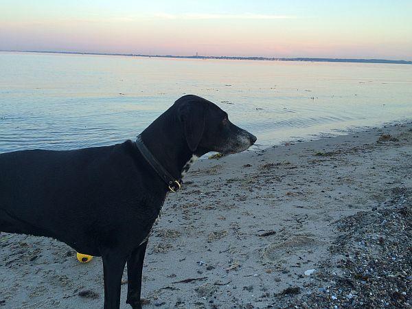 Rätselhafte Hundekrankheit – Vorsicht bei Reisen nach Norwegen!