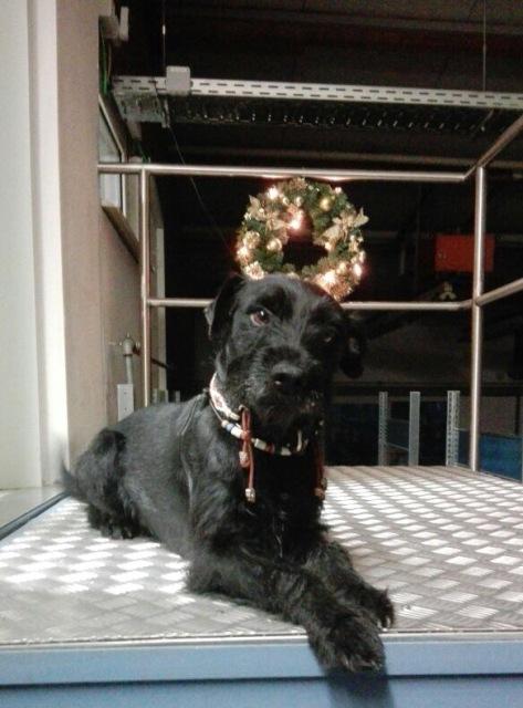 Unsere Hunde sind Weihnachten dabei!