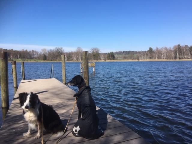 Ukleisee: Gefahr für Hunde durch giftige Algen