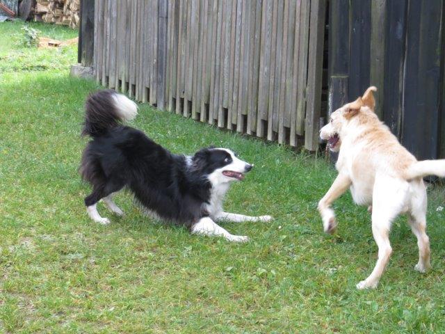 Dogsharing