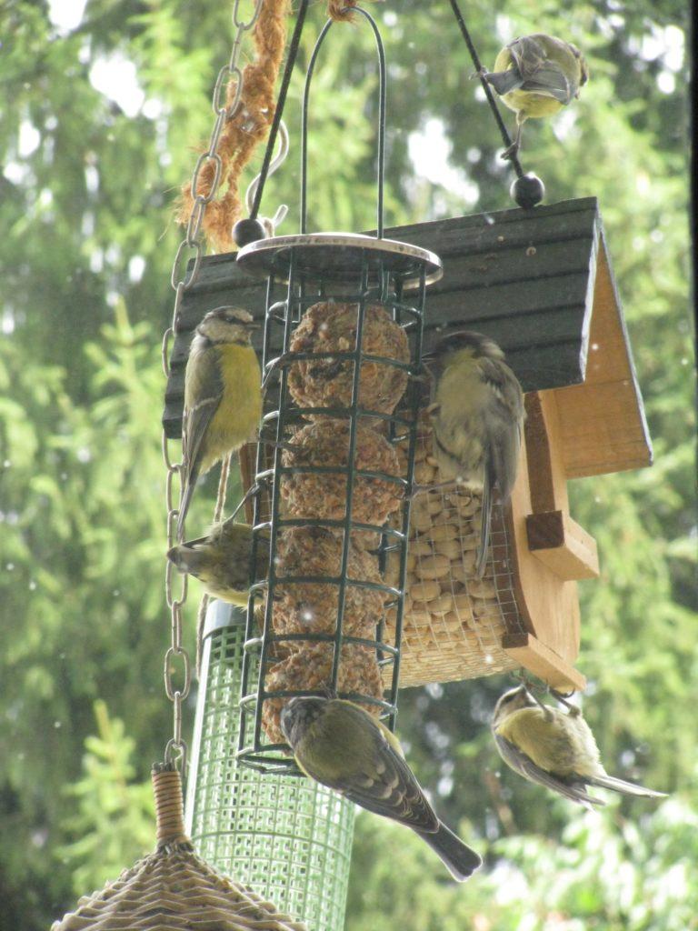 Tote Vögel durch Ganzjahresfütterung!
